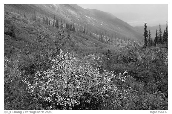 Arrigetch Valley in autumn. Gates of the Arctic National Park (black and white)