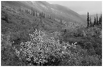 Arrigetch Valley in autumn. Gates of the Arctic National Park ( black and white)