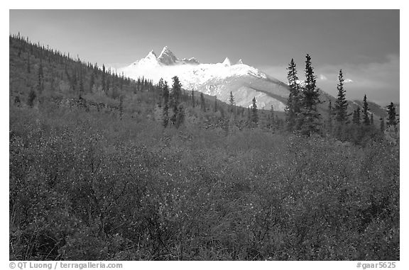 Arrigetch Peaks and tundra from Arrigetch Creek entrance, early morning. Gates of the Arctic National Park (black and white)