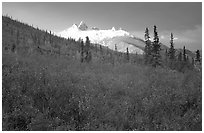 Arrigetch Peaks and tundra from Arrigetch Creek entrance, early morning. Gates of the Arctic National Park, Alaska, USA. (black and white)
