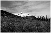 Arrigetch Peaks and tundra from Arrigetch Creek entrance, morning. Gates of the Arctic National Park ( black and white)