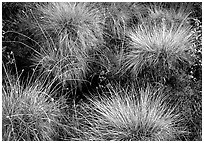 Tussocks. Gates of the Arctic National Park, Alaska, USA. (black and white)