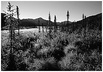 Tussocks near Circle Lake, Alatna River valley, early morning. Gates of the Arctic National Park, Alaska, USA. (black and white)
