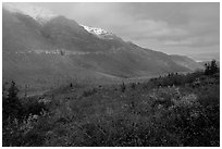 Shrubs and mountains in mist. Gates of the Arctic National Park, Alaska, USA. (black and white)