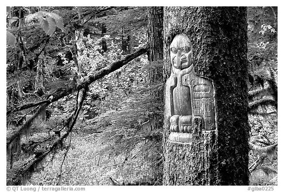 Tree carved by native Tlingit indians, Bartlett Cove. Glacier Bay National Park (black and white)