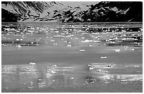 Icebergs and reflections, West arm. Glacier Bay National Park, Alaska, USA. (black and white)