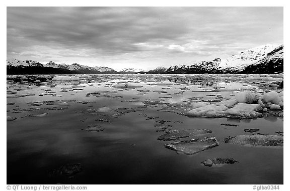 Ice-choked waters, West arm. Glacier Bay National Park (black and white)