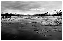 Ice-choked waters, West arm. Glacier Bay National Park, Alaska, USA. (black and white)