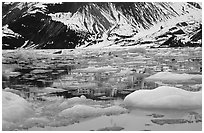 Ice-chocked waters in John Hopkins inlet. Glacier Bay National Park, Alaska, USA. (black and white)