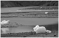 Icebergs and mud flats near Mc Bride glacier. Glacier Bay National Park, Alaska, USA. (black and white)