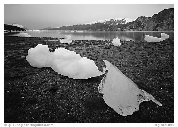 Icebergs near Mc Bride glacier, Muir inlet. Glacier Bay National Park (black and white)