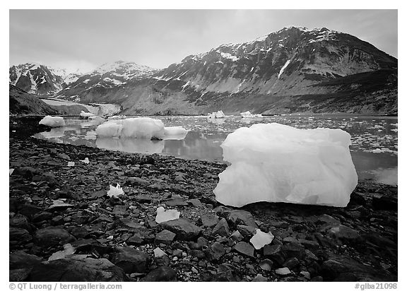 Icebergs and algae-covered rocks, Mc Bride inlet. Glacier Bay National Park (black and white)
