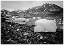 Icebergs and algae-covered rocks, Mc Bride inlet. Glacier Bay National Park ( black and white)