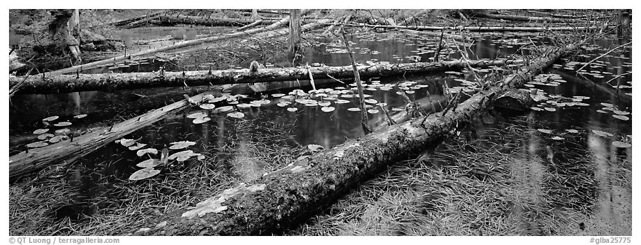 Fallen logs in pond. Glacier Bay National Park (black and white)