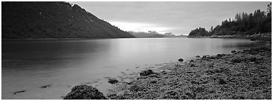 Moss-covered rocks in fjord. Glacier Bay National Park (Panoramic black and white)