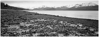Shore with seaweed uncovered by low tide. Glacier Bay National Park (Panoramic black and white)