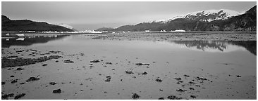 Tidal flat with icebergs in the distance. Glacier Bay National Park (Panoramic black and white)