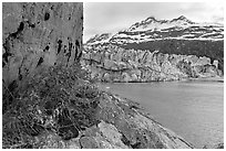 Rock ledge with dwarf fireweed, Lamplugh glacier, and Mt Cooper. Glacier Bay National Park ( black and white)