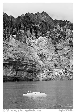 Iceberg, seabirds, and front of Margerie Glacier with black ice. Glacier Bay National Park (black and white)