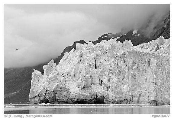 Terminus face of Margerie Glacier. Glacier Bay National Park (black and white)