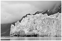 Terminus face of Margerie Glacier. Glacier Bay National Park, Alaska, USA. (black and white)