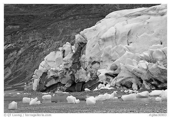 Stranded icebergs on beach and Reid Glacier terminus. Glacier Bay National Park (black and white)