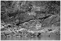 Grizzly bear on rocks by the water. Glacier Bay National Park, Alaska, USA. (black and white)