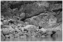 Grizzly bear and boulders by the water. Glacier Bay National Park, Alaska, USA. (black and white)