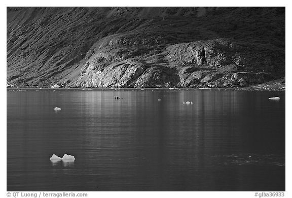 Icebergs and spot of sunlight on slopes around Tarr Inlet. Glacier Bay National Park (black and white)