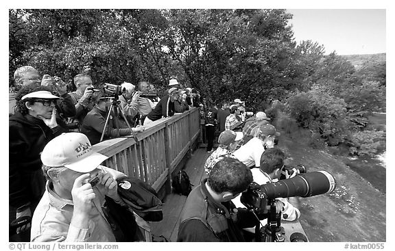 Photographers at the Brooks falls obervation platform. Katmai National Park (black and white)