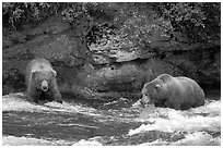 Brown bears (scientific name: ursus arctos) fishing at the Brooks falls. Katmai National Park, Alaska, USA. (black and white)