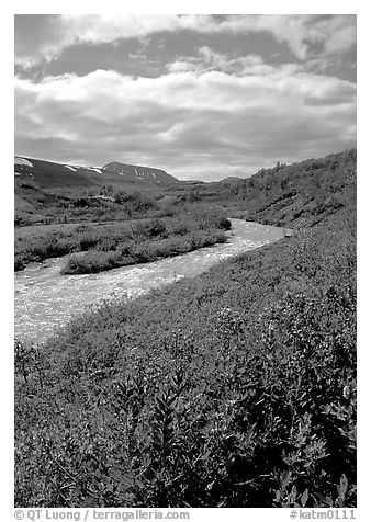 Lupine and Lethe river on the edge of the Valley of Ten Thousand smokes. Katmai National Park (black and white)