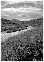 Lupine and Lethe river on the edge of the Valley of Ten Thousand smokes. Katmai National Park, Alaska, USA. (black and white)