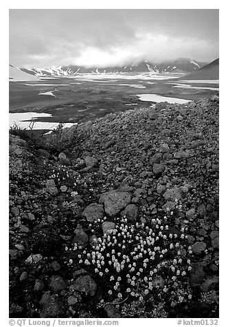 Pumice and wildflowers, Valley of Ten Thousand smokes. Katmai National Park (black and white)