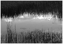 Reflections in pond near Brooks camp. Katmai National Park, Alaska, USA. (black and white)