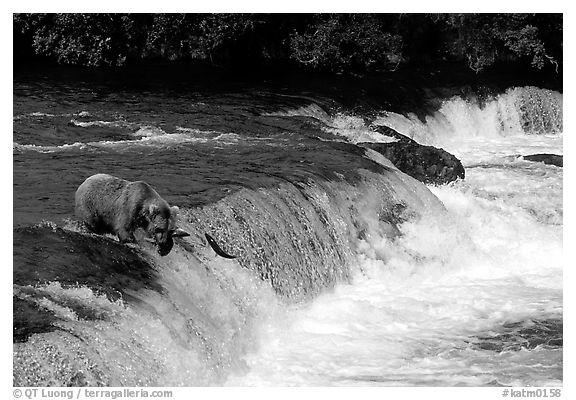 Overview of Brooks falls. Katmai National Park (black and white)