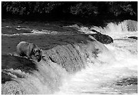 Overview of Brooks falls. Katmai National Park, Alaska, USA. (black and white)