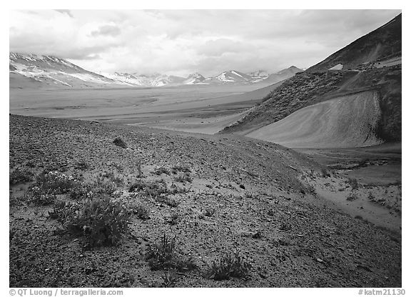Wildflowers growing on foothills bordering the Valley of Ten Thousand smokes. Katmai National Park (black and white)