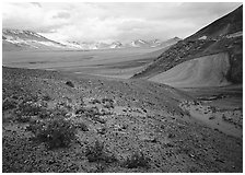 Wildflowers growing on foothills bordering the Valley of Ten Thousand smokes. Katmai National Park, Alaska, USA. (black and white)