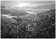 Wildflowers, pumice, and distant peaks in storm, Valley of Ten Thousand smokes. Katmai National Park ( black and white)