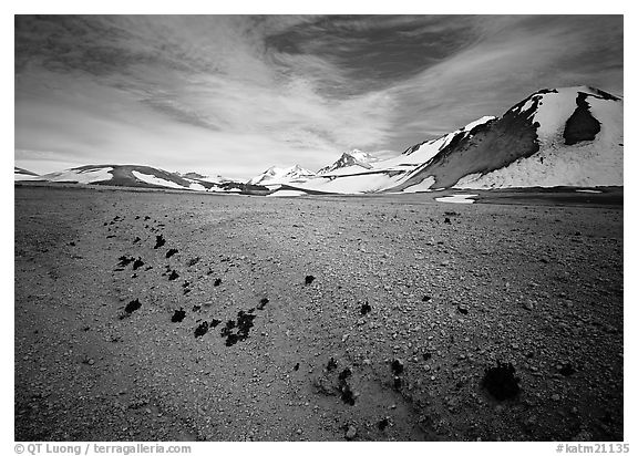 Rare plants growing out of the ash of Valley of Ten Thousand smokes. Katmai National Park (black and white)