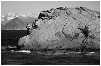 Rock with cormorant and sea lions in Aialik Bay. Kenai Fjords National Park, Alaska, USA. (black and white)