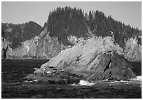 Sea lions on rock in Aialik Bay. Kenai Fjords National Park, Alaska, USA. (black and white)