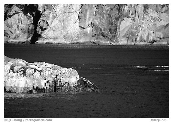 Rock with sea lions in Aialik Bay. Kenai Fjords National Park (black and white)