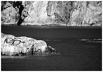 Rock with sea lions in Aialik Bay. Kenai Fjords National Park, Alaska, USA. (black and white)