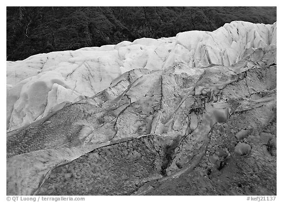 Grey ice, blue ice, Exit Glacier and forest. Kenai Fjords National Park (black and white)