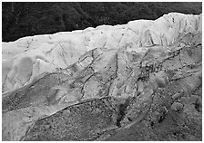 Exit Glacier and forest. Kenai Fjords  National Park ( black and white)