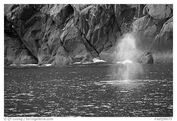 Whale spouting. Kenai Fjords National Park (black and white)