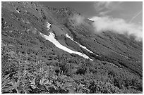 Lupine, neve, and verdant mountain slopes. Kenai Fjords National Park, Alaska, USA. (black and white)