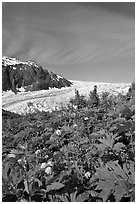 Wildflowers and Exit Glacier. Kenai Fjords National Park, Alaska, USA. (black and white)